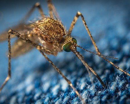Disinfestazione delle Zanzara come si fa, i vari metodi per eliminarle dal giardino