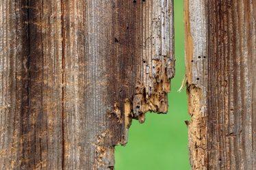 Tarli del legno, come riconoscere i segni e le tipologie